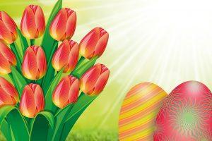 tulip-634023_1280
