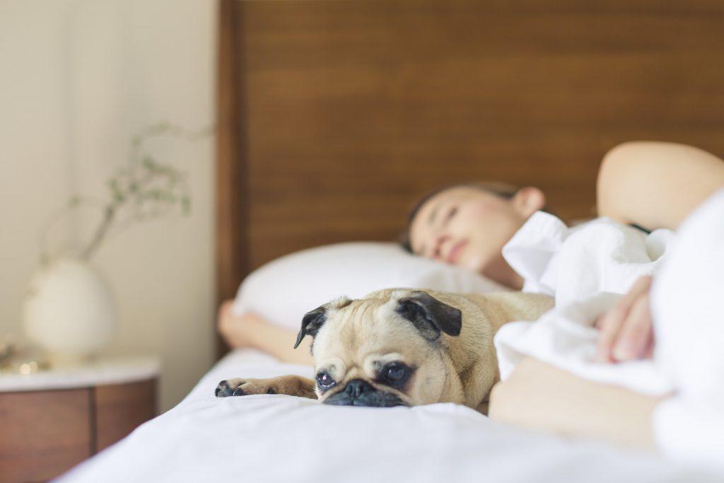 materac memory jest odpowiedni dla dorosłych, dzieci, a i zwierzęta lubią na nich wypoczywać